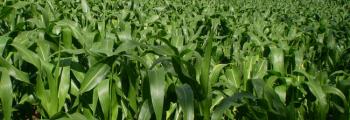 Priorizamos el desarrollo de la agricultura orgánica